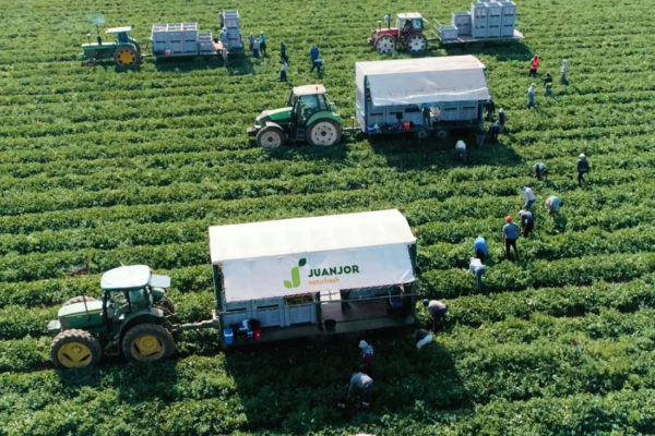juanjor-melon-recoleccion-tractor-1100